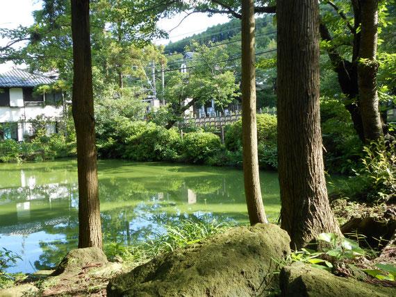 白鷺池 北鎌倉方向