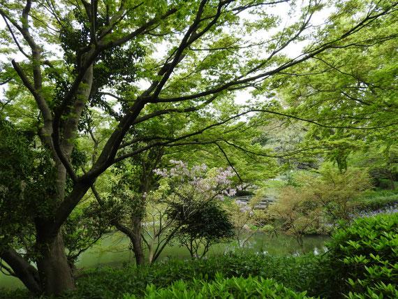 4月、ウオーキングコースの新緑
