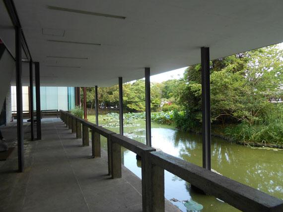 回廊から平家池を望む。中央奥の樹木の中から撮った写真です。