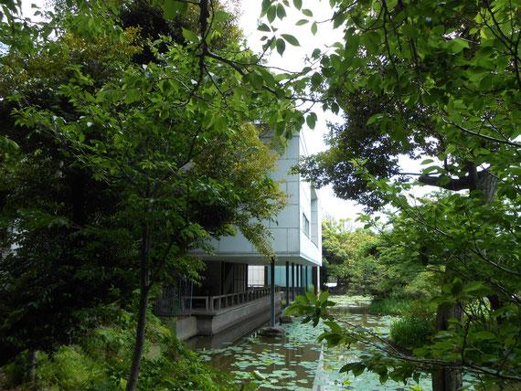 正門から右の平家池の遊歩道から。 このアングルもいいね!