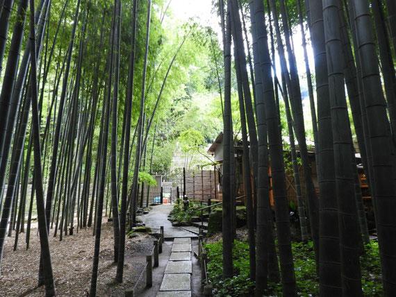 竹林の中の茶屋「休耕庵」
