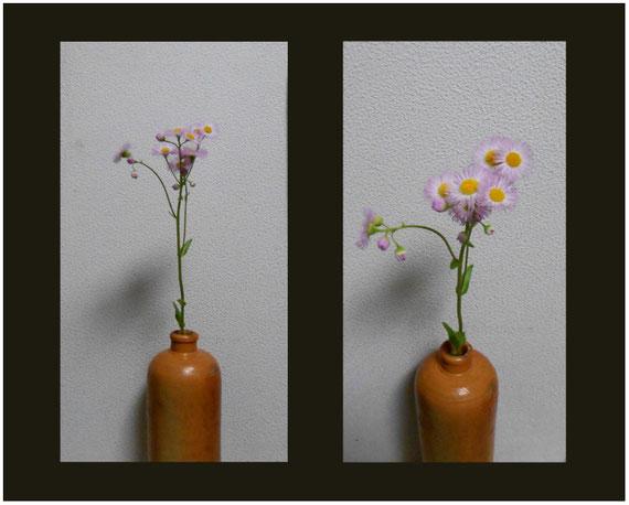 春紫苑の生け花