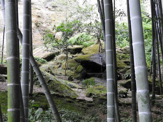 休耕庵から竹林と湧き水