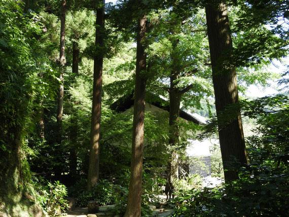 墓苑から観る松ヶ岡宝蔵