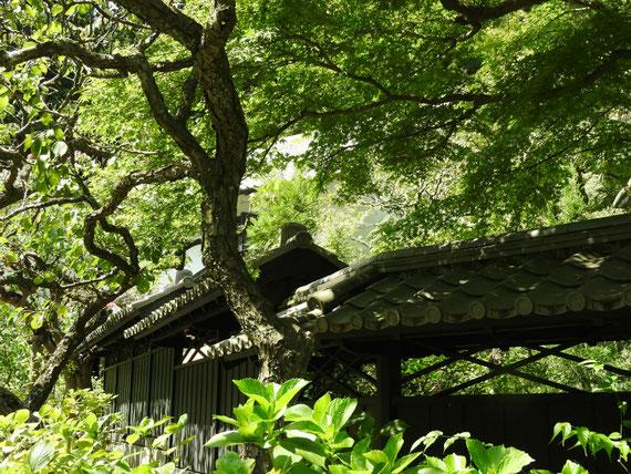 東慶寺書院塀 9月