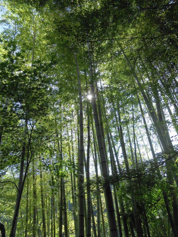 休耕庵、塔頭の跡、竹林