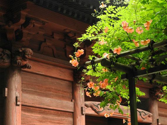 二天門と、のうぜんかずらの花