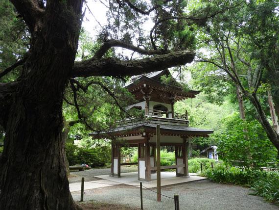 浄智寺鐘楼門 5月