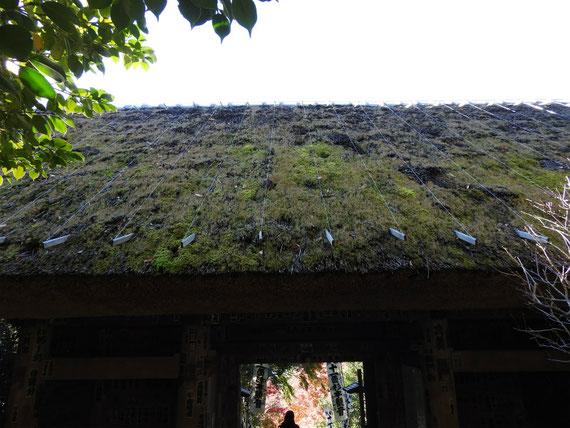 杉本寺仁王門の茅葺屋根 12月