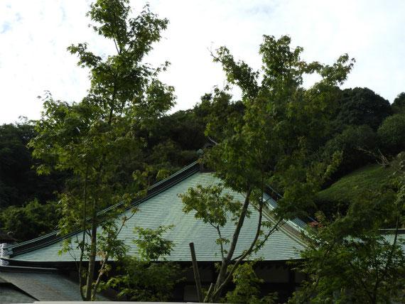 本堂(龍護殿)の屋根