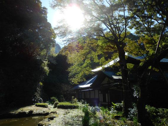瑞泉寺本堂庭園 11月
