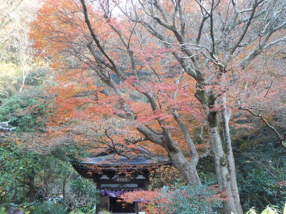如意庵を降りたあたりの境内の紅葉。 きれいでした。