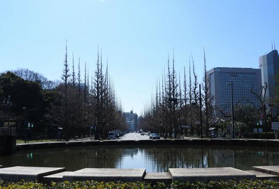 野球場よりいちょう並木をみる。右に見えるビルは伊藤忠本社