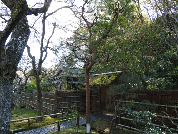 白蓮舎前の庭園からみる、茶室寒雲亭の門