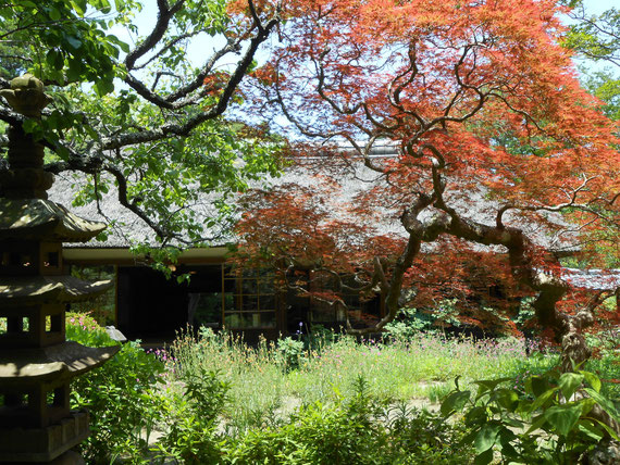浄智寺、客殿・書院と中庭