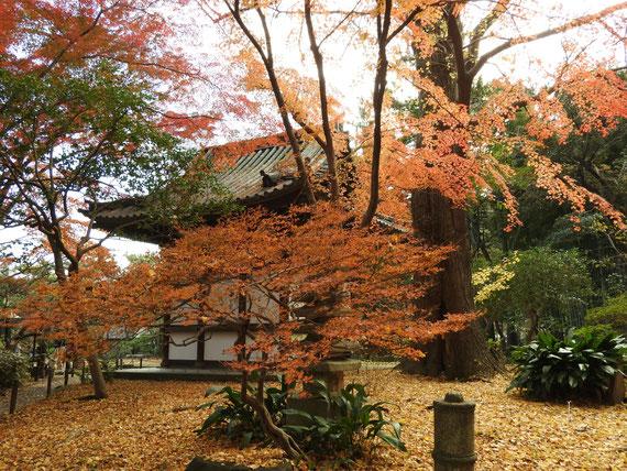 紅葉に包まれる旧天瑞寺寿塔覇堂
