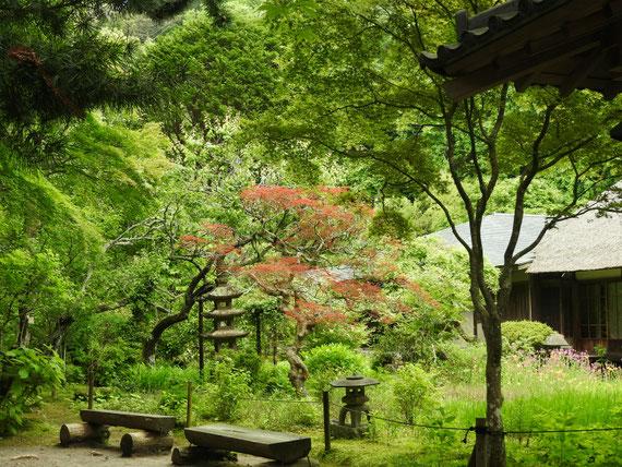 浄智寺方丈客殿裏庭園 5月