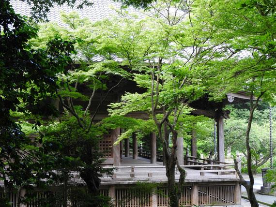 新緑に包まれる、祖師堂の回廊