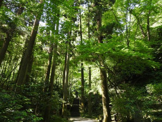東慶寺墓所への参道 6月