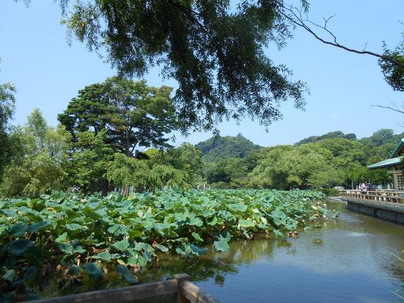 神苑ぼたん庭園、源氏池