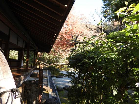 喜泉庵の庭