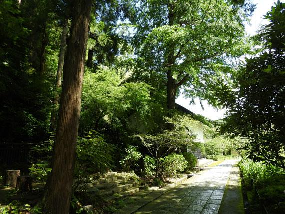 東慶寺奥の墓苑から松ヶ岡宝蔵をみる