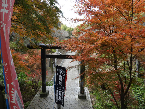 半僧坊入り口の、鳥居と紅葉