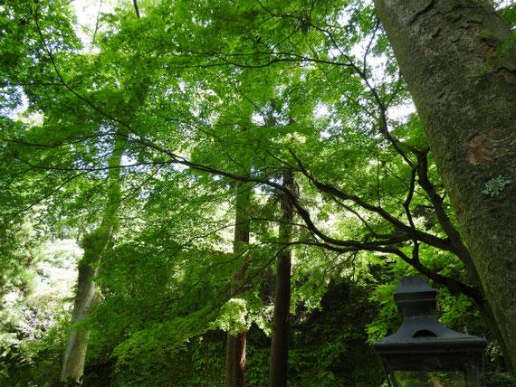 墓苑への樹木