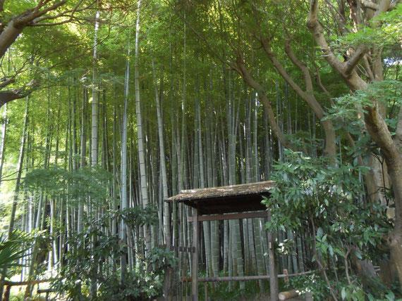 竹林への入り口