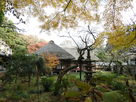 紅葉の、浄智寺書院・客殿