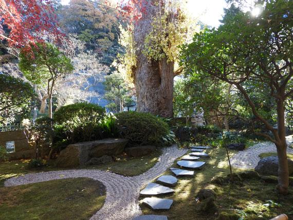 山門を過ぎた境内の、紅葉の日本庭園