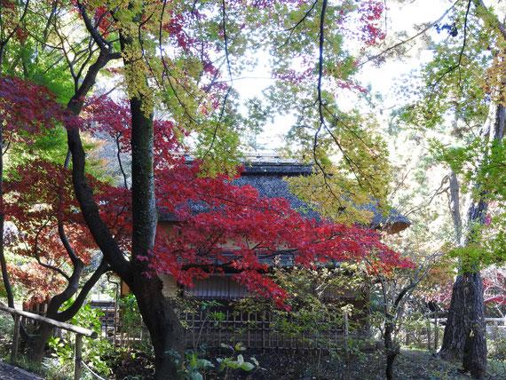 矢箆原家から観る紅葉の横笛庵