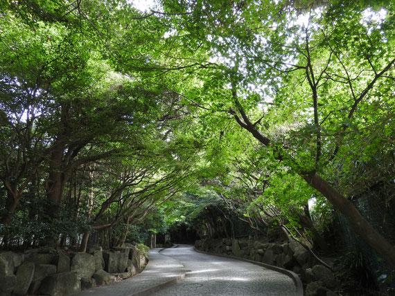 樹木に包まれた道を上ると翔鶴洞へ
