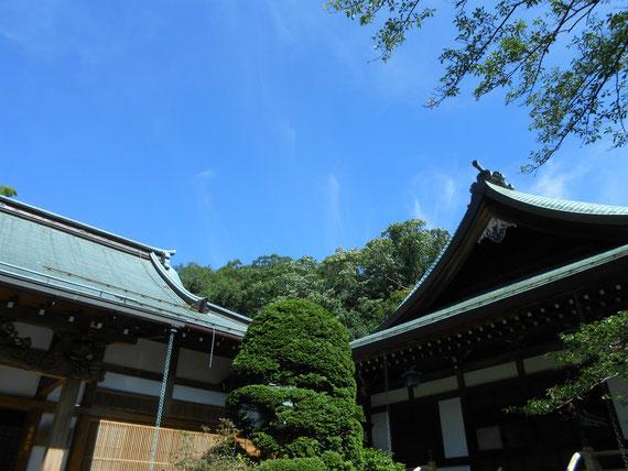 本堂と迦葉堂、青空に浮かぶ二つの寺院が印象的でした。7月の報国寺。