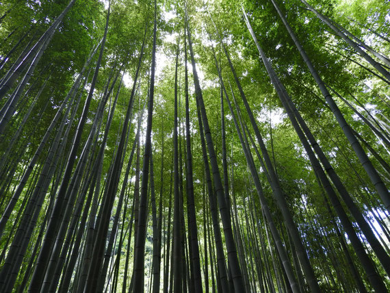 竹の庭の竹林