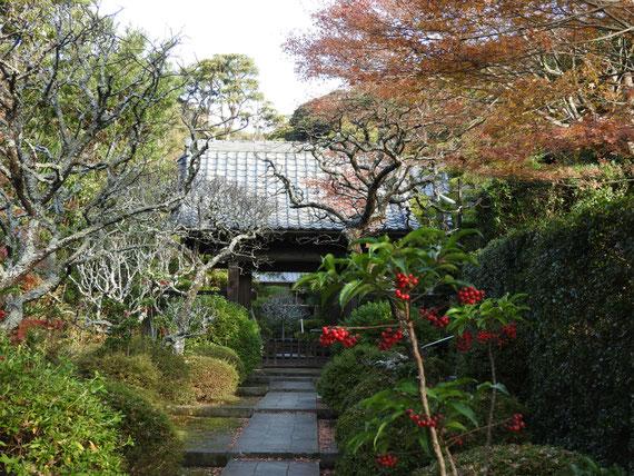 紅葉の天源院山門