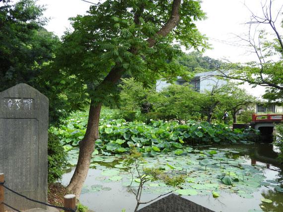旧近代美術館と平家池