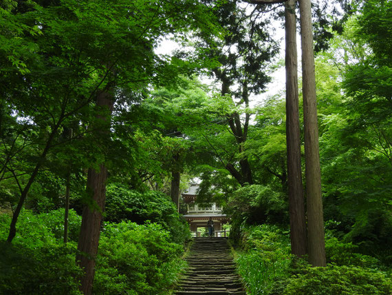 山門から石段を上り、鐘楼門へ