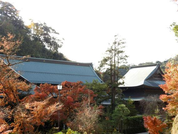 龍峰院からみる、紅葉の建長寺大庫裏と法堂