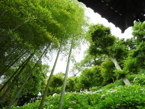 長谷寺経堂からアジサイロードをみる 6月