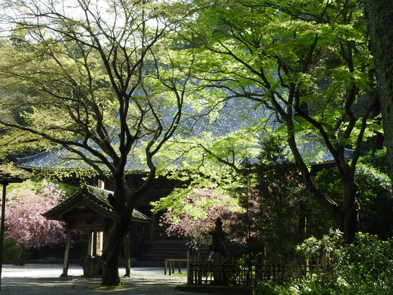 妙本寺祖師堂 4月