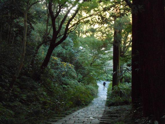 山門からの帰りの樹木鬱蒼とした石畳階段。 参拝の人が一人登ってきました。