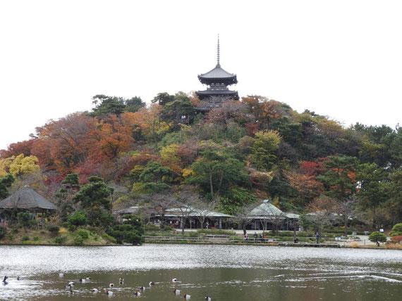 大池から旧燈明寺三重塔を望む