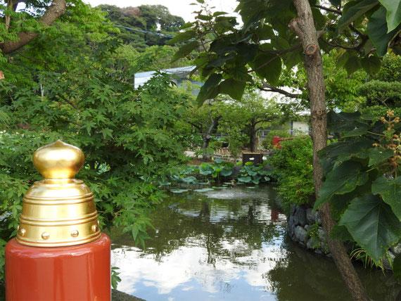 欄干から平家池を望む