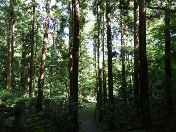 深い樹木に包まれた墓苑の参道