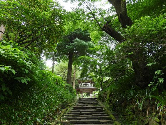 浄智寺山門石段から鐘楼門をみる 5月