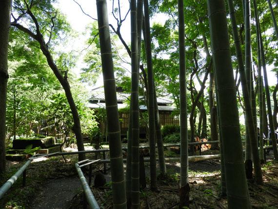 竹林から、英勝寺書院をみる