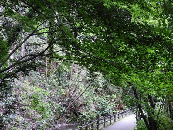 緑道の小径へ
