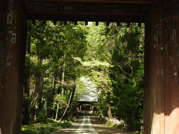 壽福金剛禅寺山門から参道をみる 4月