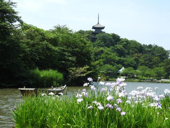 三溪園 花菖蒲と大池